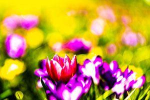 Schilderachtige kleurrijke bloemen