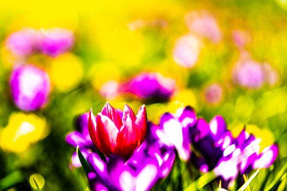 Schilderachtige kleurrijke bloemen van T de Smit