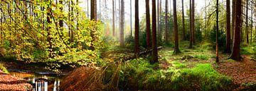 Herbstlicher Wald von Günter Albers