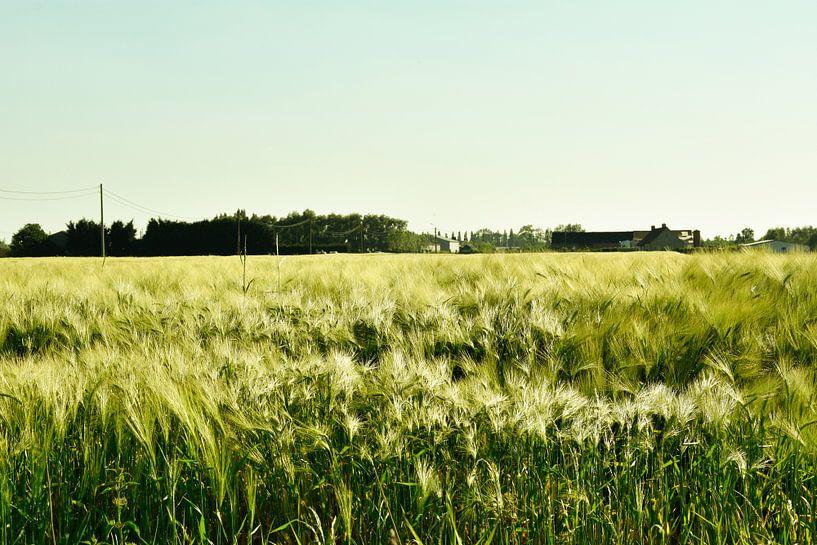 Landschap graanveld van Stef De Vos