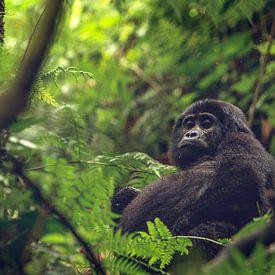 Gorilla met een dikke buik van Geke Woudstra