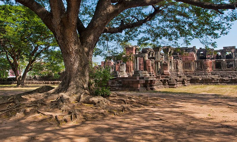 Tree and ruins von Antonio Correia