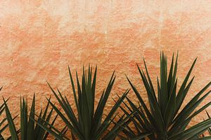Kaktus | Brasilien
