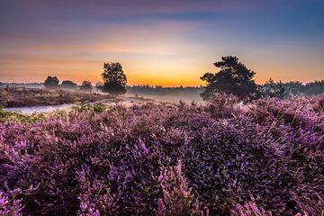 Lever du soleil sur la lande sur Eelke Brandsma