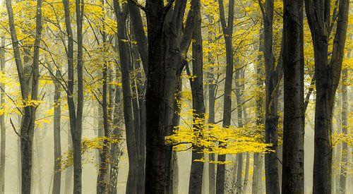 Bomen in de mist van Rob Visser
