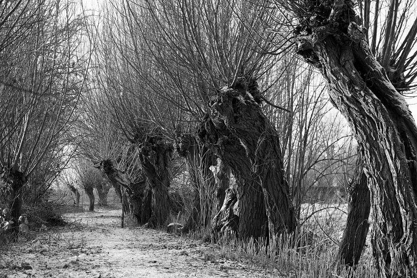 Knotwilgen in de winter van Raoul Suermondt