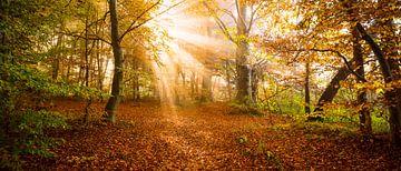 Sonnenexplosion von Denis Feiner