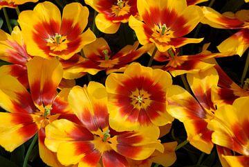 gele tulpen met rood hart close up van Carmela Cellamare