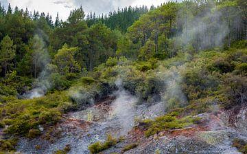 Mysterieus landschap, Noordereiland, Nieuw Zeeland van Rietje Bulthuis