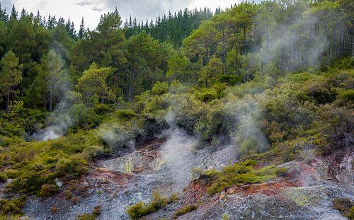 Mysterieus landschap, Noordereiland, Nieuw Zeeland