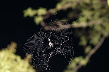 Spinne im Spinnennetz von Rosalie Broerze