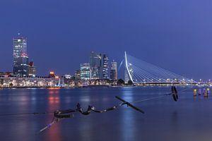 Het Maasbeeld met het zicht op het Noordereiland in Rotterdam