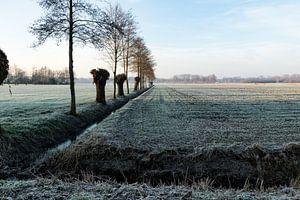 winterlandschap met knotwilgen