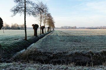 winterlandschap met knotwilgen van