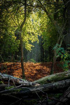 Herfst von Jack Swinkels