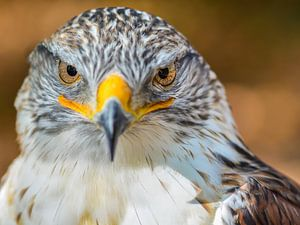 Angry Bird van Cynthia Derksen
