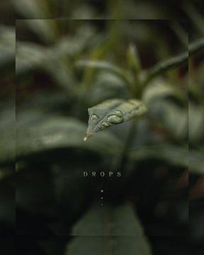 Waterdruppels op blad van Tom de Bruijn