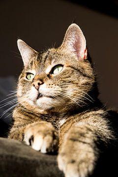 cyperse kat in zon van Marieke Funke
