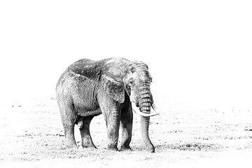 Olifant in Ngorongoro van Robert Styppa