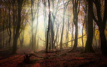 Sonnenstrahlen von Rob Sprenger