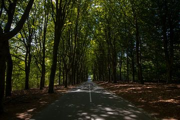Le sentier de la forêt sur Yoanique Essink