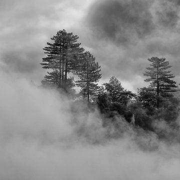 Bomen in een mist tengevolge van de werking van een geiser van