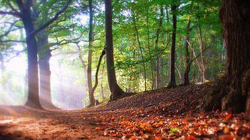 Herfst. van Patrick Hartog