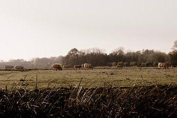Tau über der niederländischen Landschaft von Suzanne Fotografie