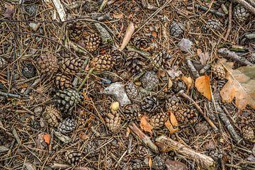 Herfst in het bos van Fred Leeflang