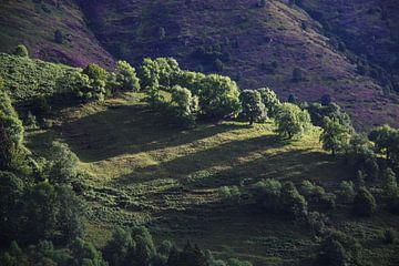 Berglandschap in de Pyreneeën van