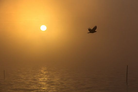 Bird of Avalon van Arjan van de Logt
