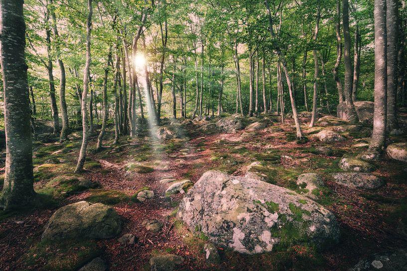 Waldweg in Blekinge von Skyze Photography by André Stein