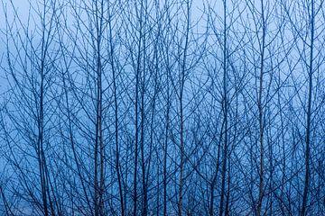 Silhouette van Berkenbomen van Tonko Oosterink
