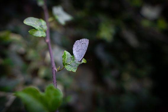Boomblauwtje op een groene blad