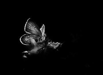 Schmetterling von Remco loeffen