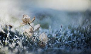 Op een koude Winterochtend van Jolanda Vlastuin