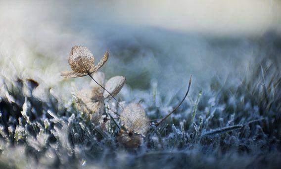 Op een koude Winterochtend