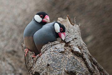 Paar Reisvögel von Beschermingswerk voor aan uw muur