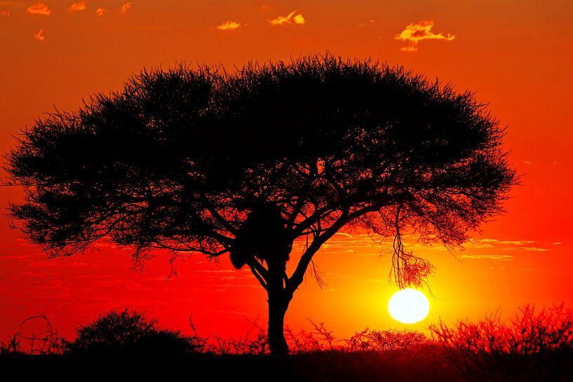 Der Tag beginnt in Namibia von W. Woyke