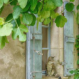 Kat in Frankrijk van Christa Thieme-Krus