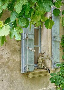 Kat in Frankrijk