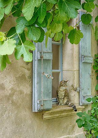 Katze im Frankreich