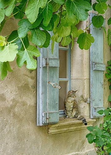 Kat in Frankrijk van