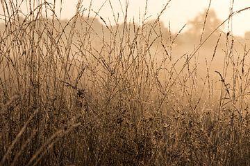 Reiche Vegetation auf dem Gut Kallenbroek von Michiel van den Ham