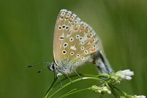 Kleine kleurrijke vlinder van Ulrike Leone