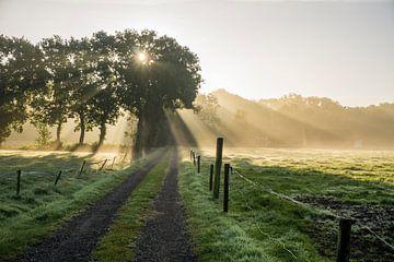 Der Weg in der Morgensonne von Hessel de Jong