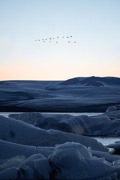 Vögel über dem Gletscher von Bastis photos