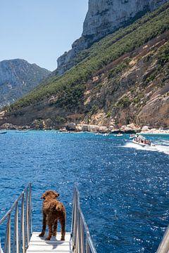 Auf dem Ausguck am Golf von Orosei Italien von Ton Tolboom