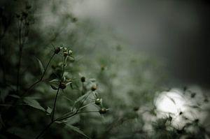 Quiet poetry