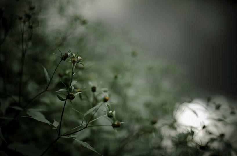 Quiet poetry van Dick Nieswaag